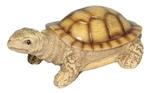 Черепаха (цвет.)