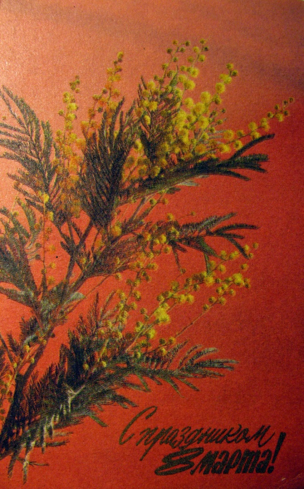 цветок, мимоза, букет, веточка