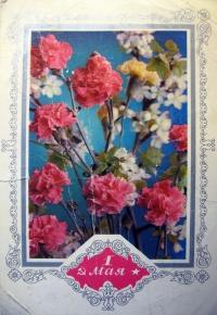 цветок, гвоздика, букет, листок, веточка