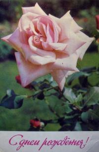 цветок, роза, листок, бутон