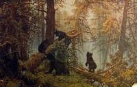 медведь, дерево, лес, ель, трава, небо