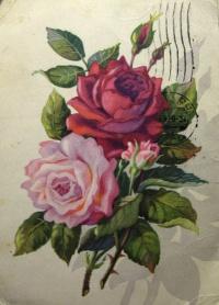 цветок, роза, листок, бутон, тень, букет