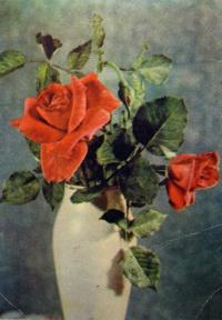 цветок, роза, ваза, букет, листок