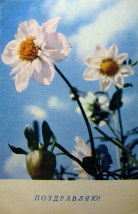 цветок, небо, листок, бутон, нарцисс, облако