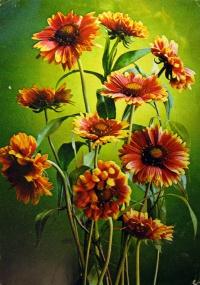 цветок, листок, букет