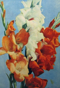 цветок, букет, гладиолус, бутон, листок