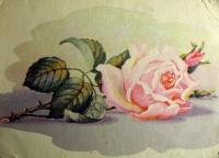 цветок, роза, бутон, листок