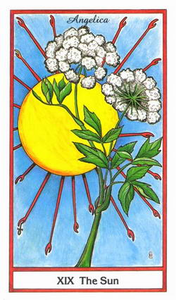 The Sun - Angelica